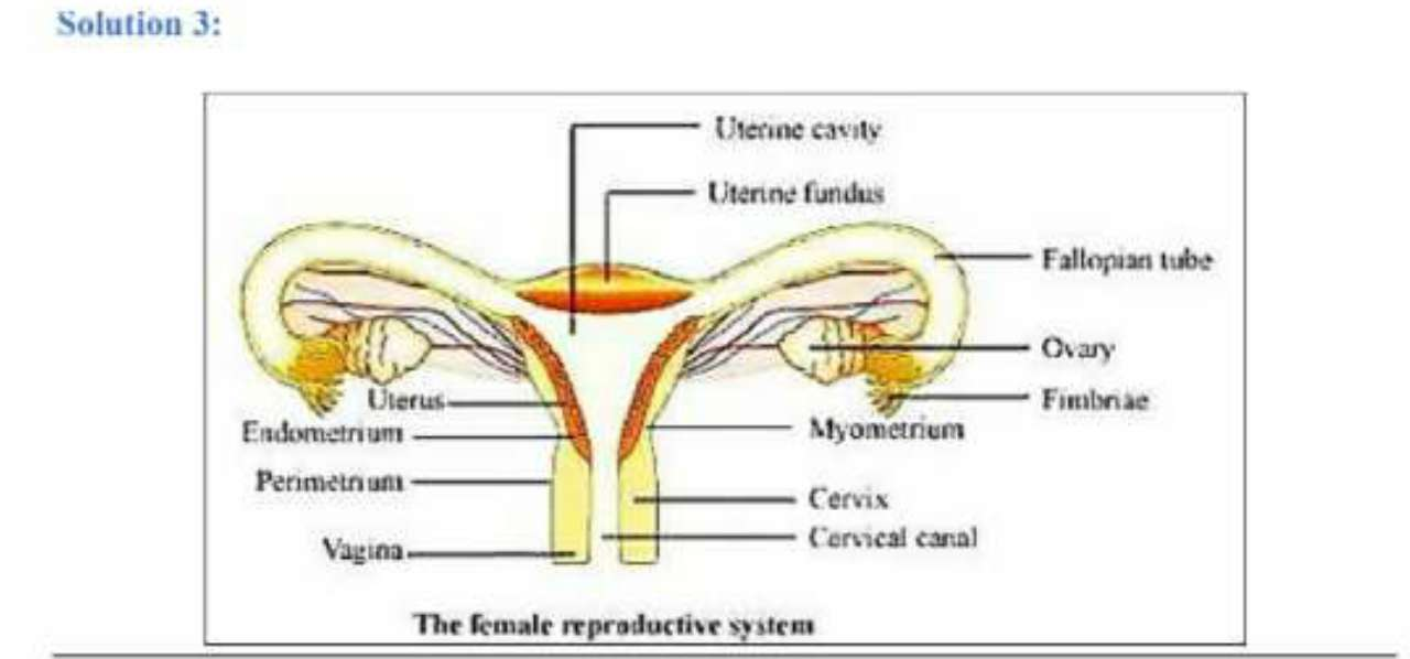 Question 3: Draw a labelled diagram of female reproductive ...